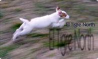 El Tigre North v1.1 logo