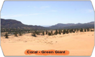 Coral-Green Giant logo
