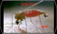 Jungle Fever logo