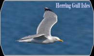 Herring Gull Isles logo
