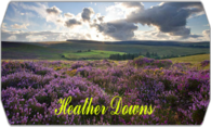 Heather Downs logo